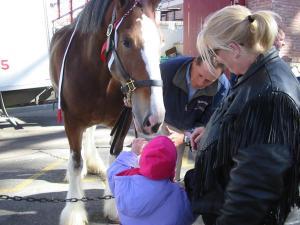 emma horse